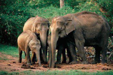 Sacred Animals of India